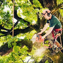 arborist cutting down a tree in whitby